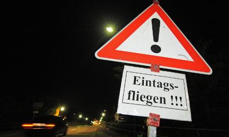 Mating mayflies pose Bavarian traffic hazard