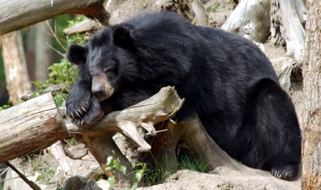Toddler attacked by bear after climbing zoo fence