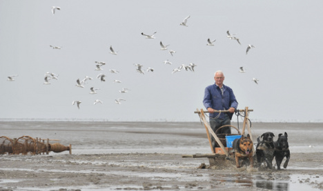 Lone pensioner keeps dog sled crabbing tradition alive