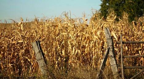 Sweden set for worst grain harvest in 15 years