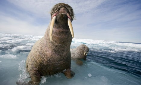 Inuit block German-Canadian Arctic tests for fear of wildlife