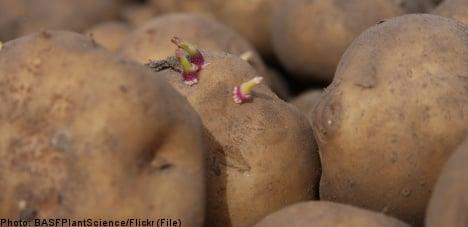 'Frankenfood' spuds in Sweden due to 'error'