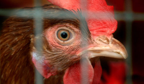Poultry farmers launch attempt to clean up image