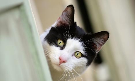 City decrees mandatory cat sterilisation to curb strays