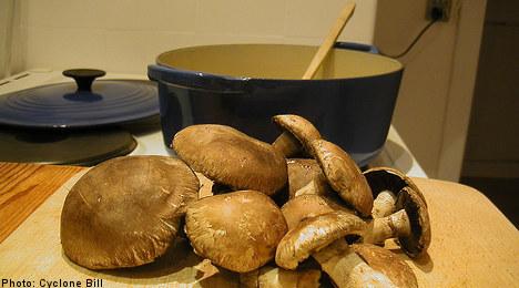Giant cep mushroom found in Swedish woods