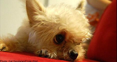 Swedish couple take dog custody battle to court