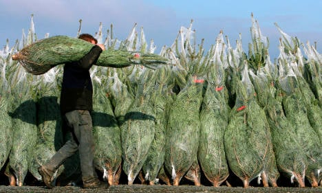 Christmas tree prices remain stable