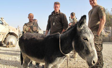 Donkey helps Bundeswehr fight Taliban in Afghanistan