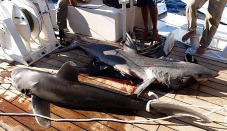 Shark kills German woman at Red Sea resort