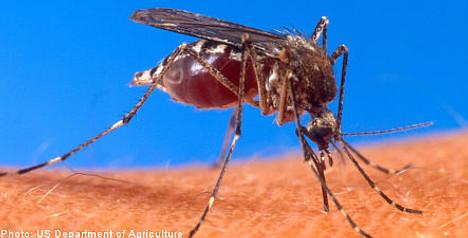 Dengue fever rises among Swedes