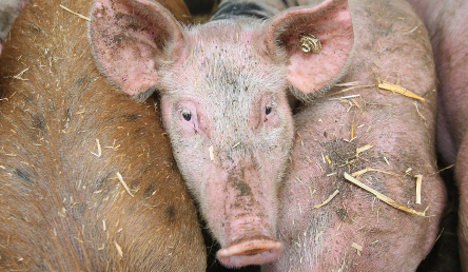 Farmers angry over minister's animal protection plan