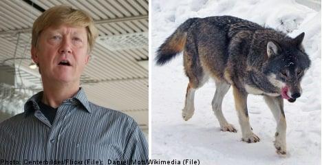 Sweden replies to EU wolf hunt reprimand