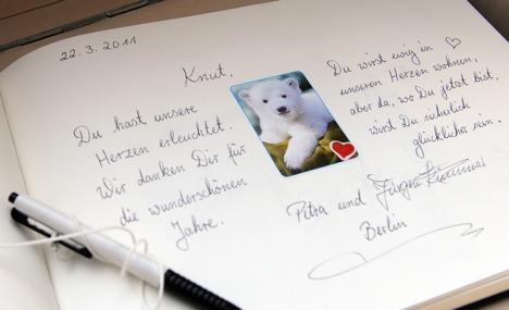 Epilepsy killed Knut, says doctor