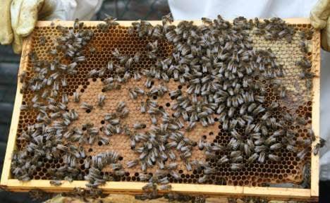 Urban beekeeping gets Berlin buzzing