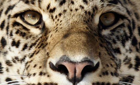 Leopard kills German woman on Namibian TV set
