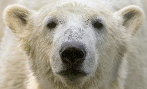 Knut died of brain disorder