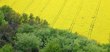 Dry weather spell threatens Swiss veggies