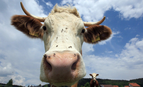 Flipped truck spills cattle onto A7 motorway