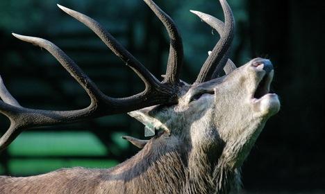Woman puts attacking deer in sweaty headlock