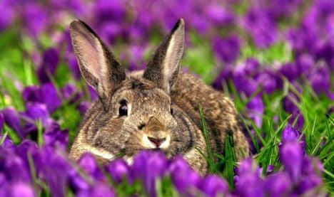 Drugs plot raid reveals old woman feeding rabbits with cannabis