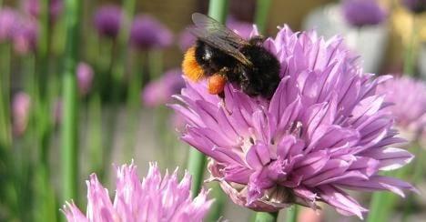 Cell phones disturb bees' buzz – study