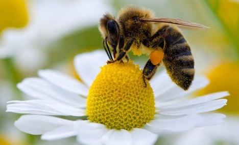 Warming climate causes honeybees to oversleep flower bloom