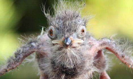 Animal park welcomes 'terror bird' cousin hatchling