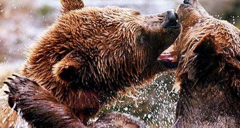 Bern bears to move to Romania
