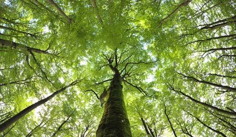 UNESCO puts five German beech forests on world heritage list