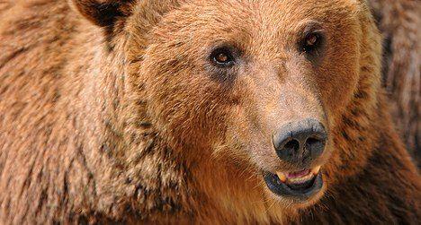 Bear sighted in popular Engadine region
