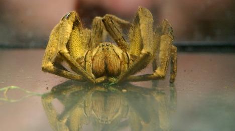 Spider shuts down Saarland supermarket