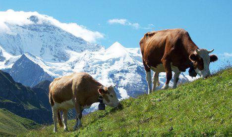 Mountain snowfalls quell Swiss summer