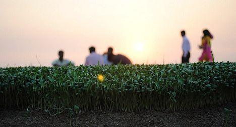 Swiss ban Egyptian seeds over E.coli fears