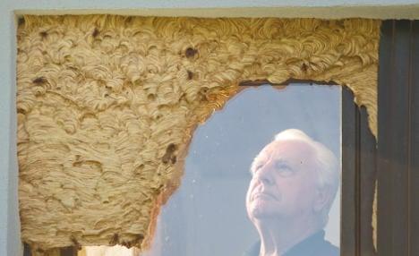 Heidelberg home has huge hornet nest