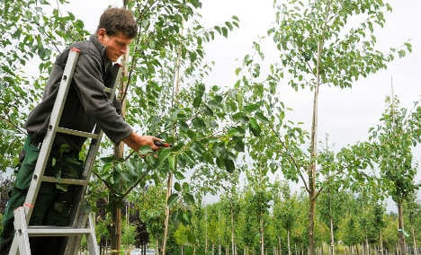 Climate change prompts search for exotic trees