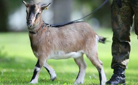 Last Bundeswehr goat gets his marching orders