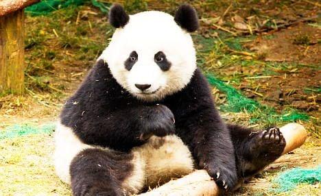 France panda loan foiled by Greek crisis