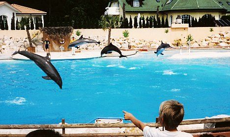 Poisoning suspected after second dolphin death at Swiss fun park