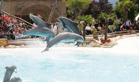 Dolphin dies after Swiss techno party