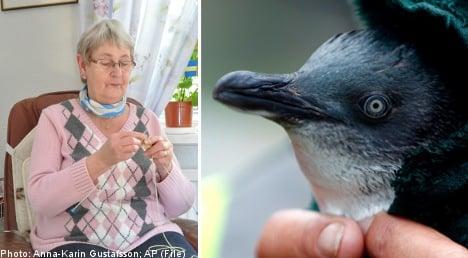Swedish grannies in bid to save freezing penguins