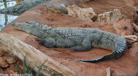Swedish zoo bankruptcy leaves crocs 'homeless'