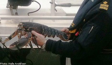 Helga, the blue lobster, receives police escort