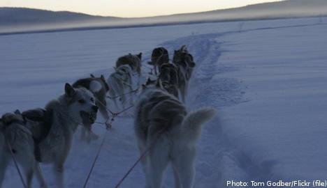 Tourist dies in freak dog sled accident
