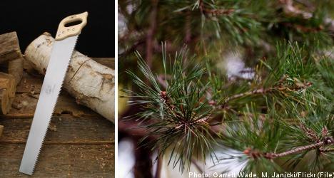 Swede fined for drunken pine tree massacre