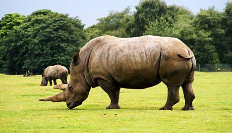 Rhino horn thieves gas Paris museum guards