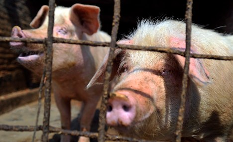 Hundreds of animals die in morning farm fire