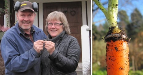 Swede pulls up carrot bearing long-lost ring