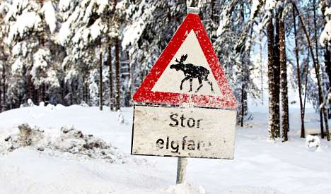 Repel railway elk with human waste: researcher
