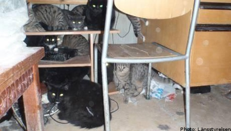 73 cats found in three-room apartment