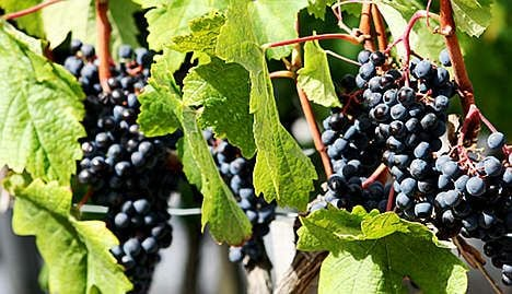 Record year for French wine and spirits exports